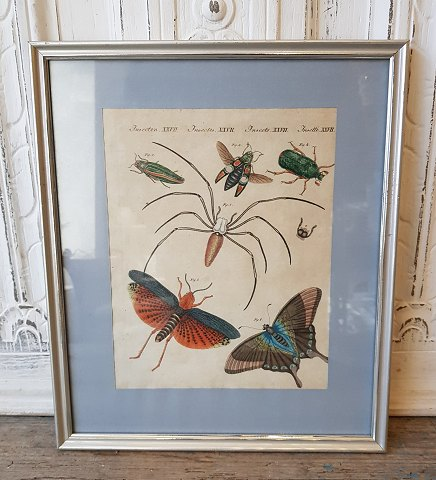 18th century hand-colored print with insects and butterflies in beautiful simple silver frame