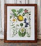 1800s hand-colored print with flowers in beautiful veneered wood frame